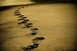 职业生涯规划的步骤有哪些?——51选校生涯规划教育平台