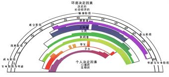 生涯彩虹图——51选校生涯规划教育平台